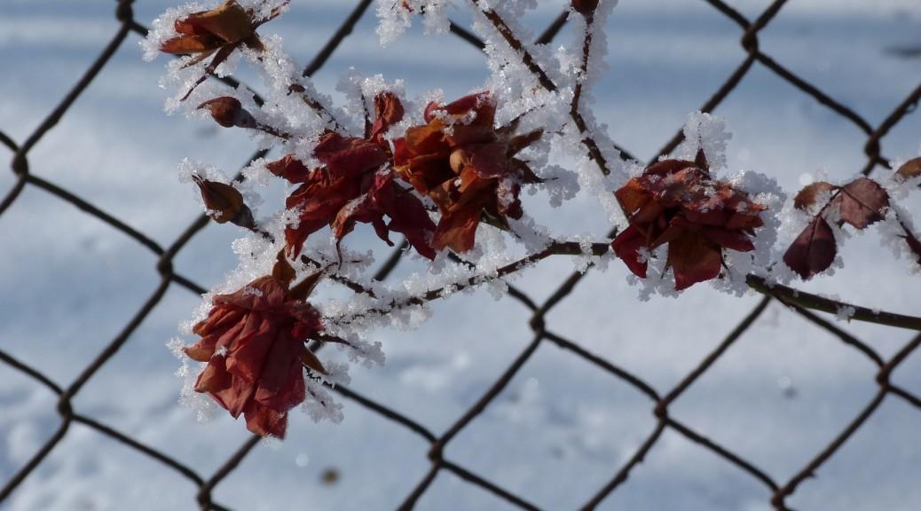 Mersdorf Ilona: Örök nyár