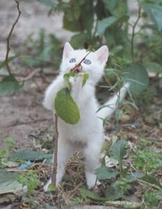 macsk1