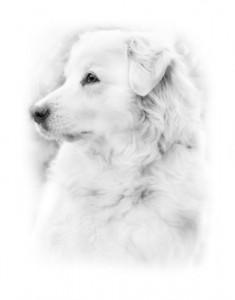 dog-1027371_960_720